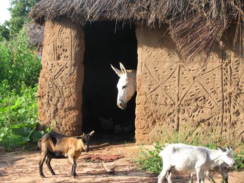 Mognoori Village Ghana Picture 111